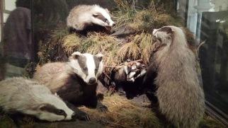 Badger family, Hufflefam